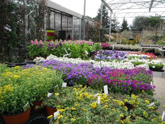jardinerie 145