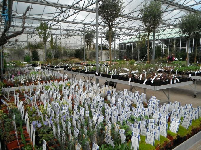 jardinerie 155