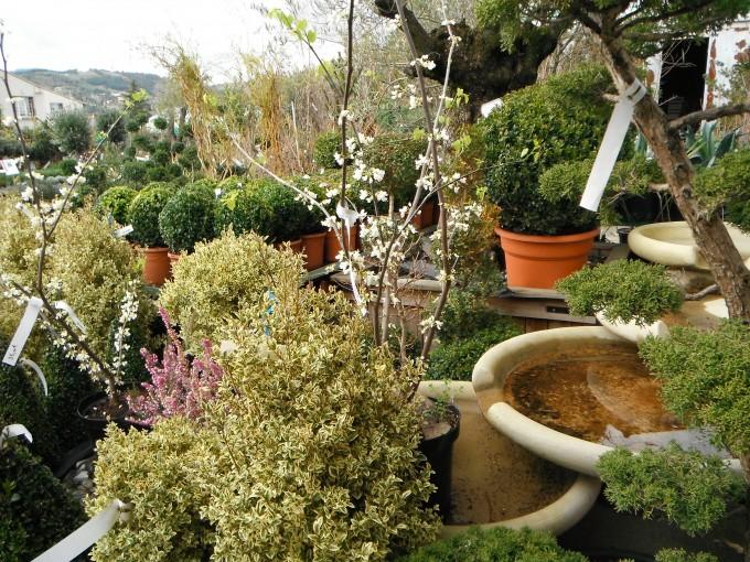 jardinerie 171