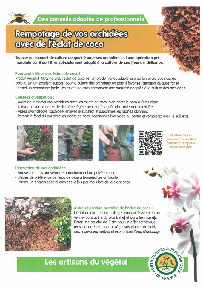Rempotage de vos orchidées