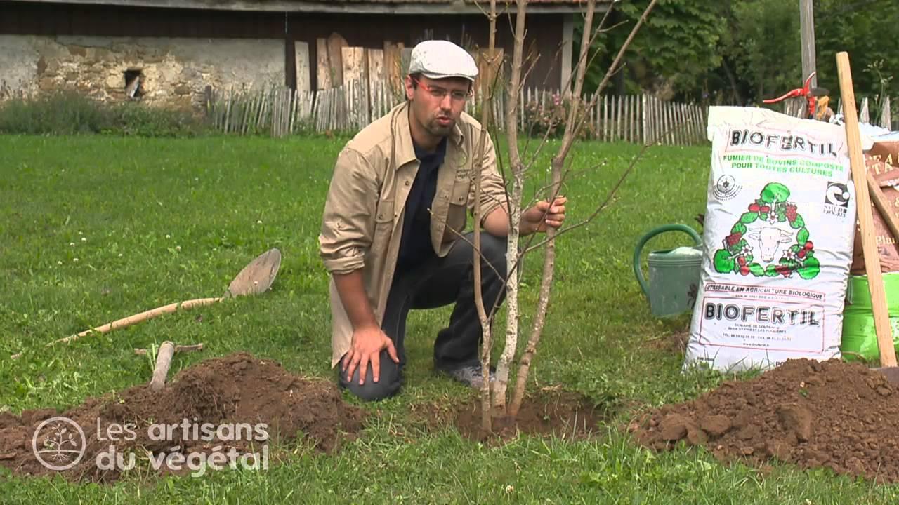 Fiches conseil en vid o p pini res jacquet - Plantation arbre en motte ...